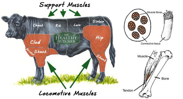 Beef Tenderness Muscle Tissue The Healthy Butcher Blog