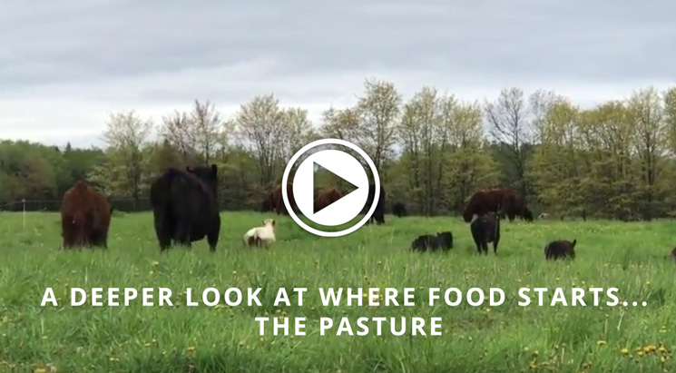 A Deeper Look at Where Food Starts… the Pasture