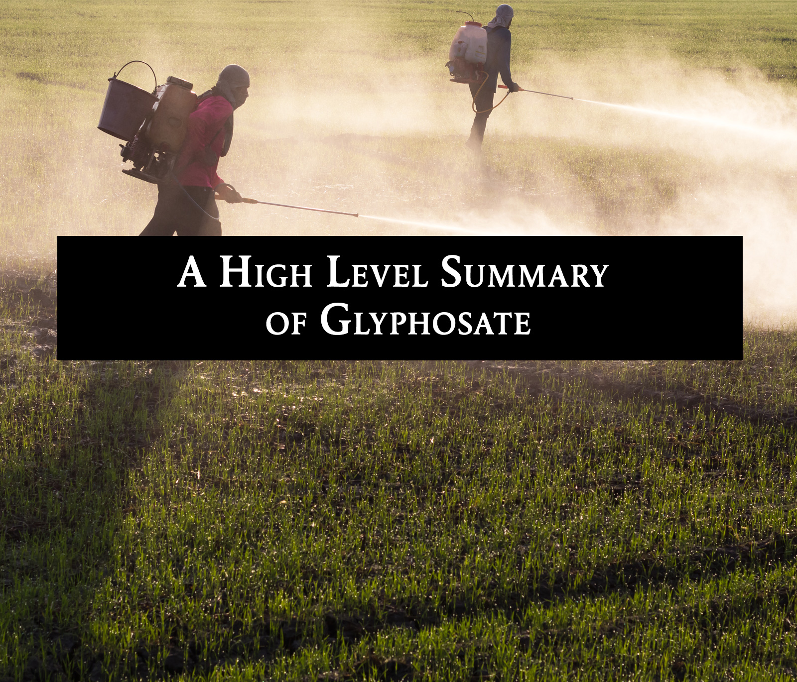 A High Level Summary of Glyphosate | The Healthy Butcher Blog
